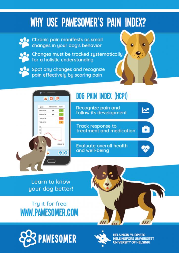 dog pain index hcpi