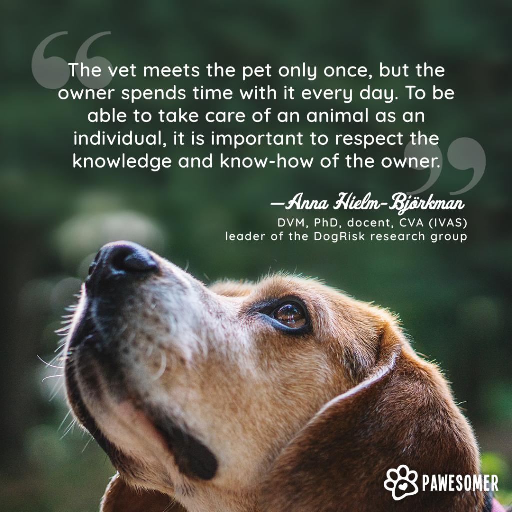 dog pain quote